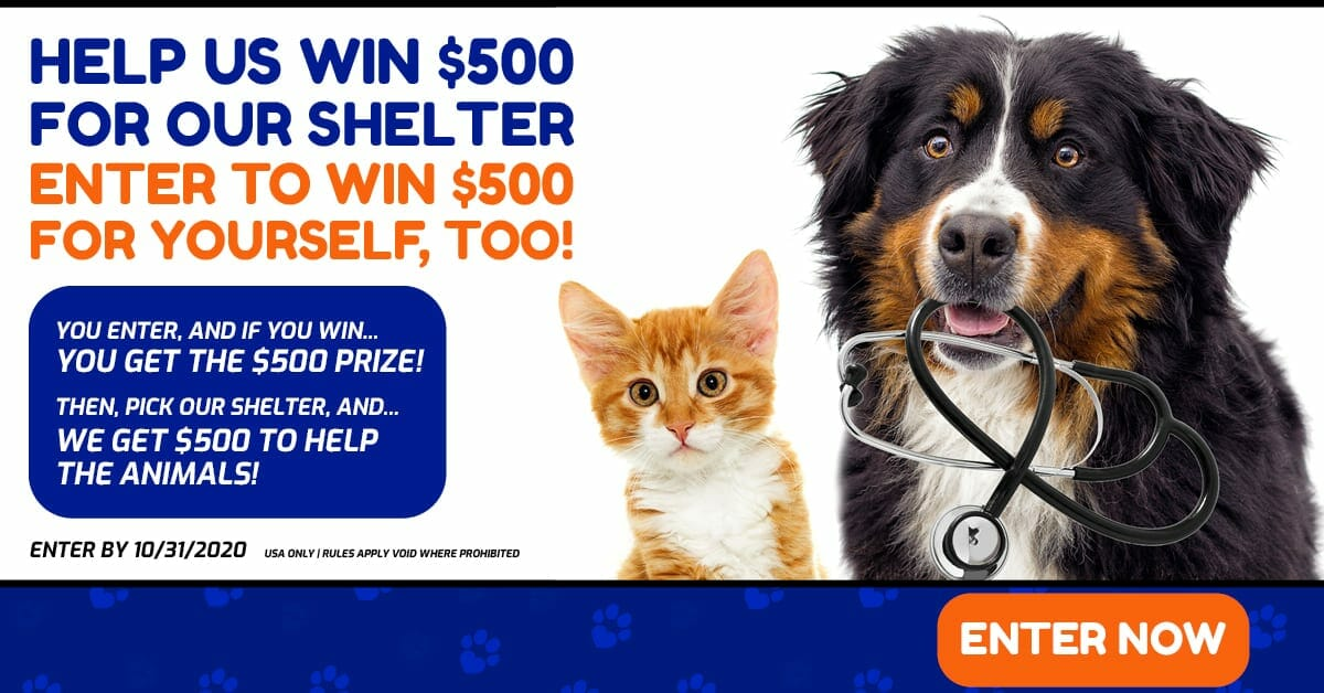 Animal Charities Donation