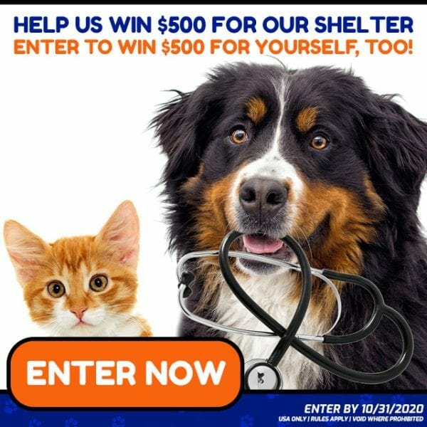 Best Animal Charities Shelter Rescue Giveaway Donations