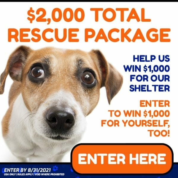 Adopt a Dog Rescue Package Giveaway BarkWiki