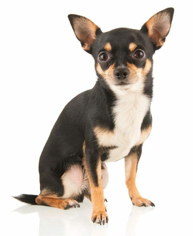 can i give my dog benadryl - can dogs take benadryl