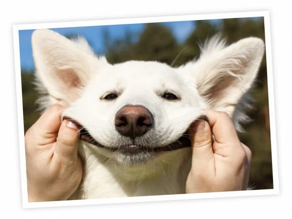 enter my pet smiling dog