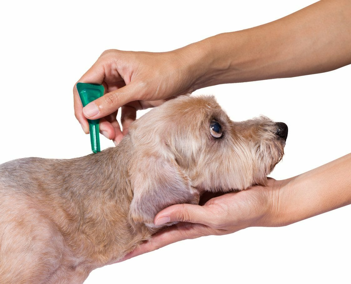 flea and tick prevention for dogs - tick medicine for dogs
