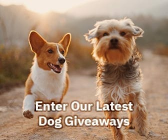 latest dog giveaways 1