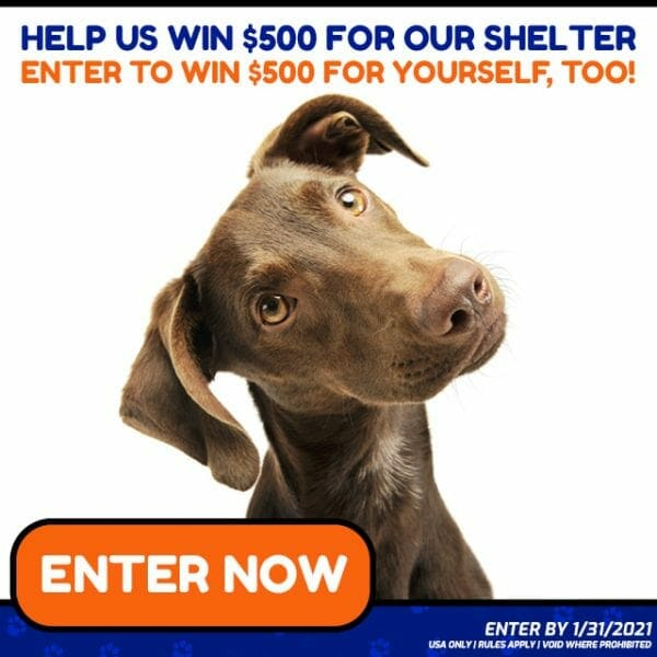 Non Profit Animal Organizations Donation Giveaway for Dogs