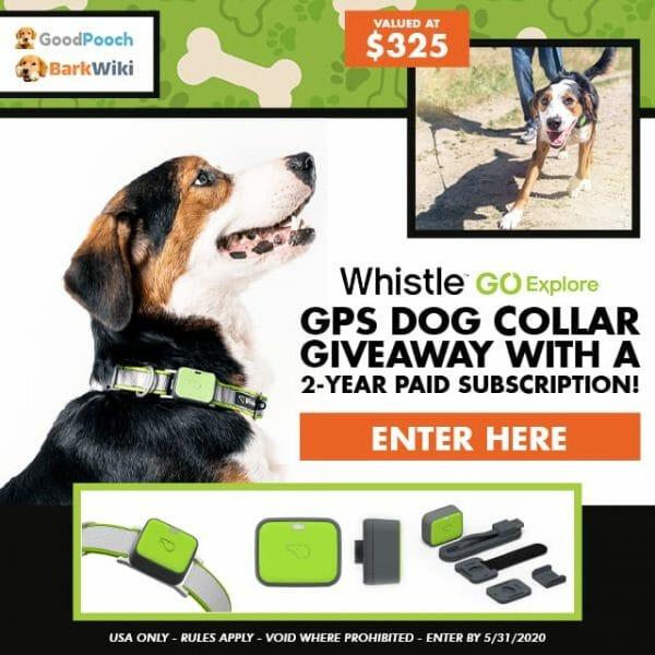 whistle go explore gps dog collar